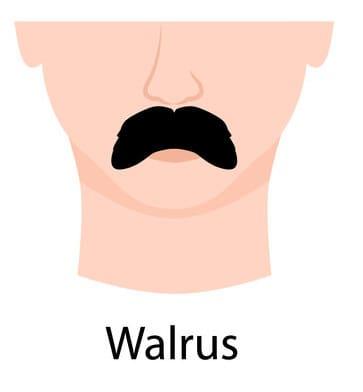 Walrus style mustache
