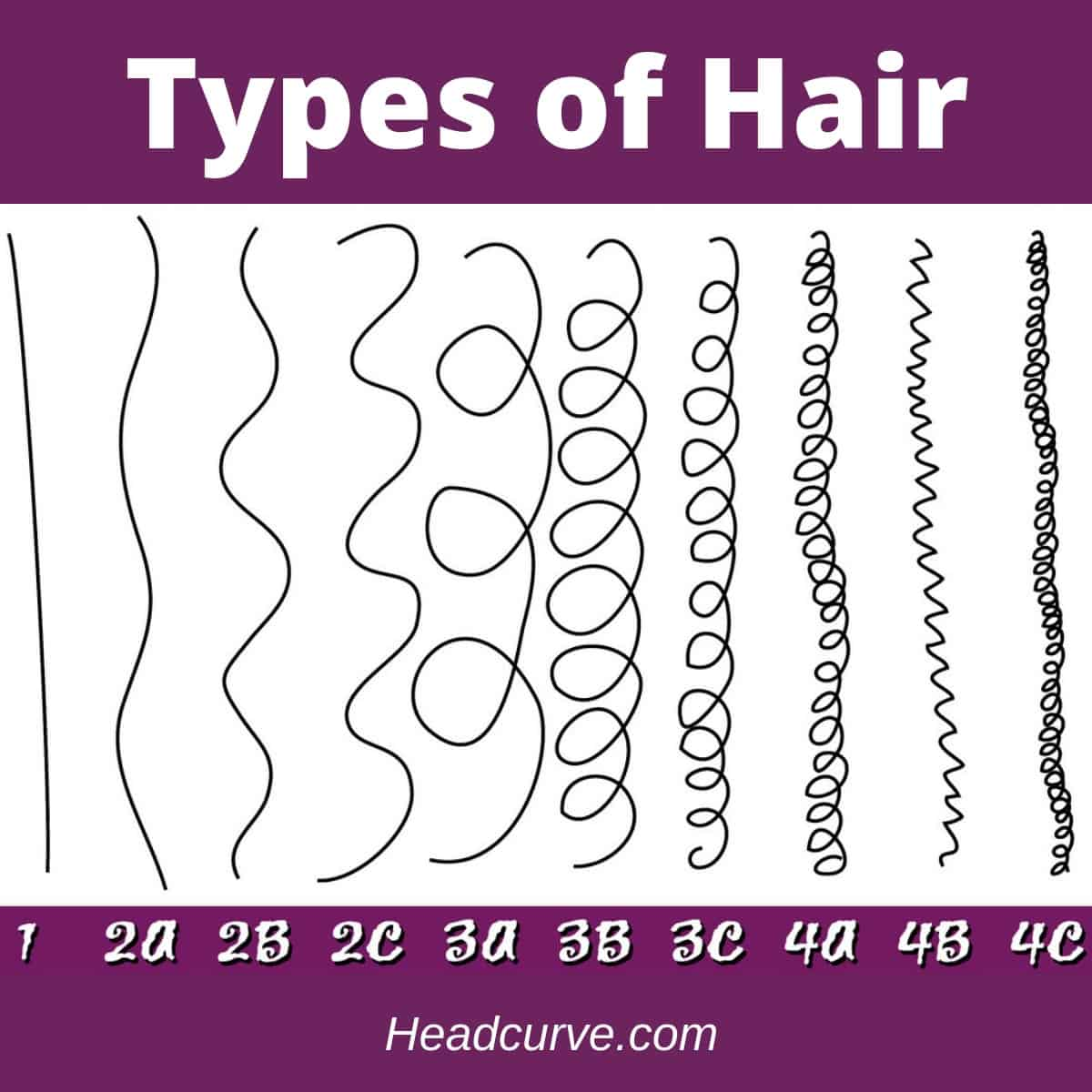 The different types of hair (chart).