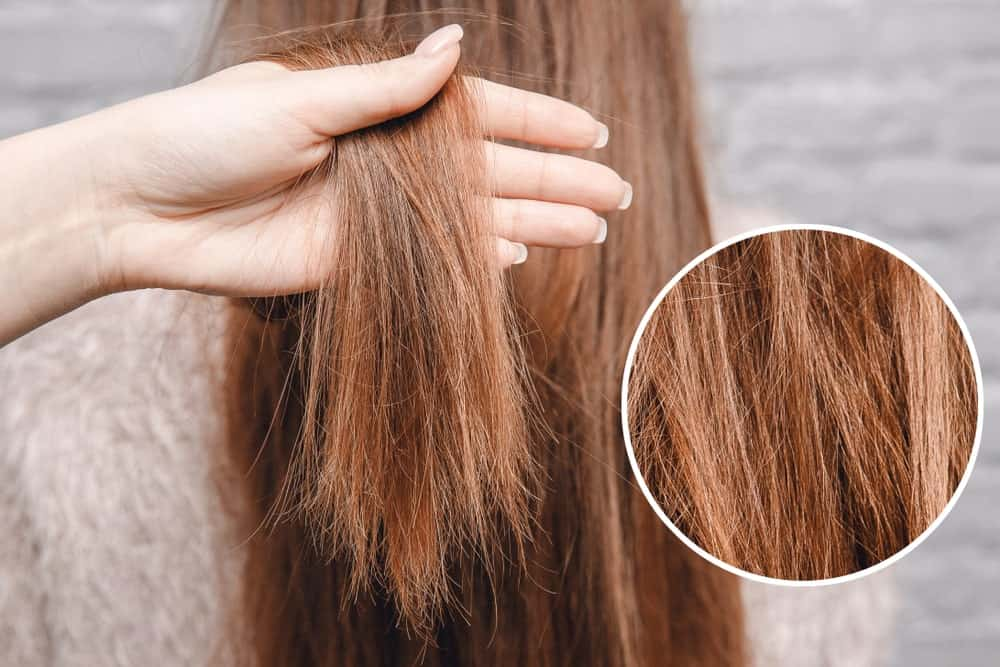 Close up of damaged hair.