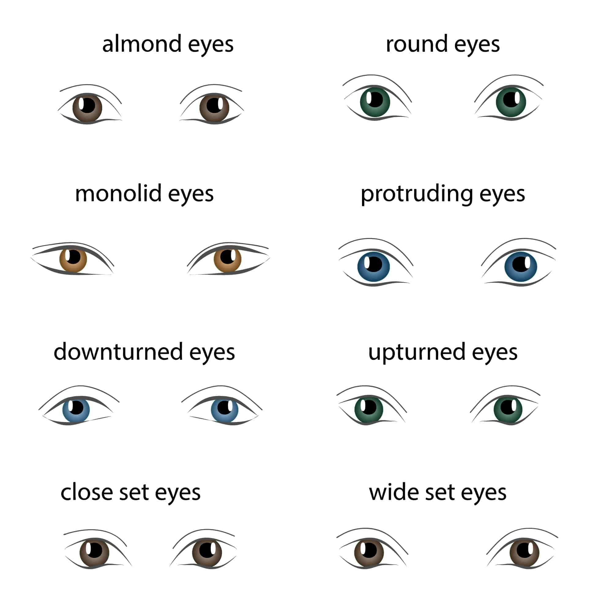 Chart of the different types of eye shapes.