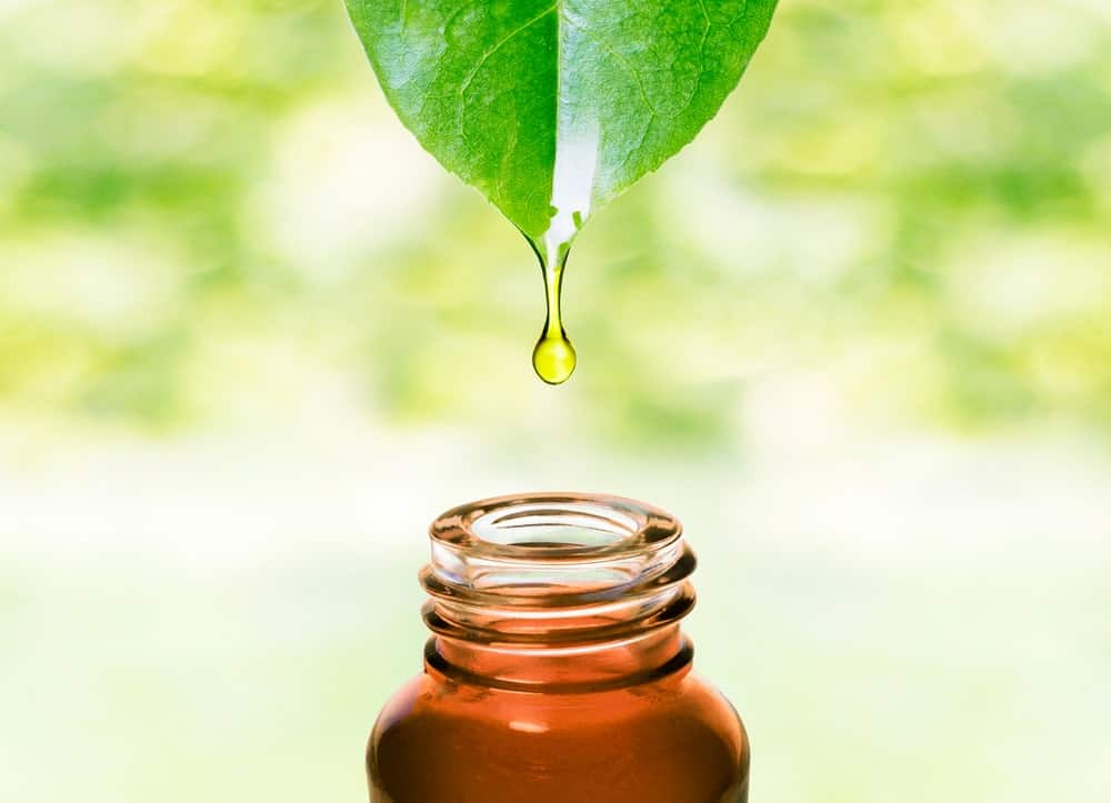 Healthy curative oil extract straight into a jar.