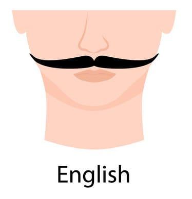 Illustration of a English Moustache.