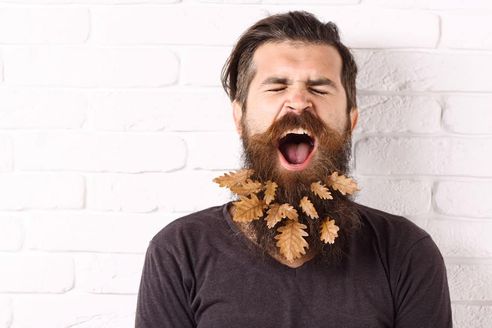 Yawning man with stylish mustache and decorative autumn leaves in long beard.